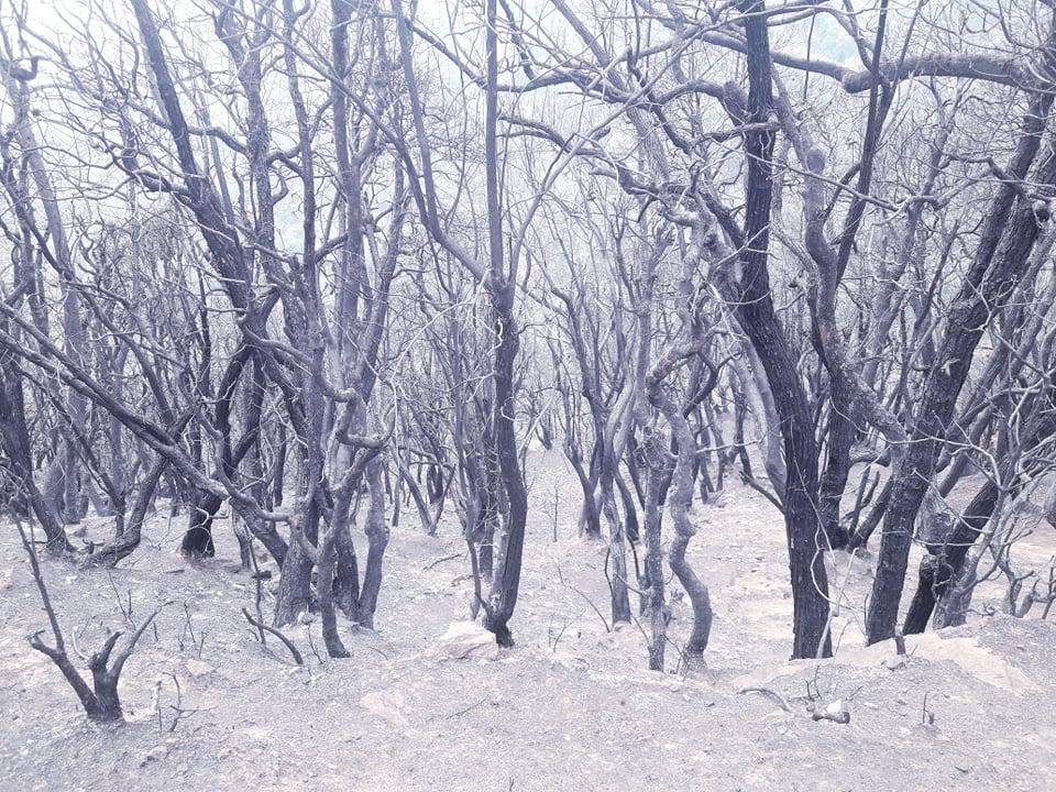 डढेंलोले उजाड बनेको जाजरकोटको वन (फोटो फिचर)
